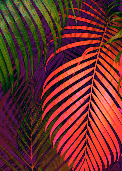 Pia Schneider COLORFUL TROPICAL LEAVES   Displate Prints on Steel
