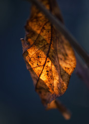 leaf leaves autumn fall falling nature macro closeup orange