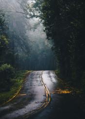 road forest nature trees fog rain
