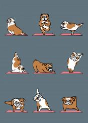 yoga englishbulldog bulldog
