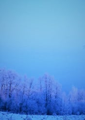 blue winter tree wood forest