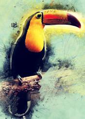 toucan toucans bird birds animal animals decor decoration illustration jbjart