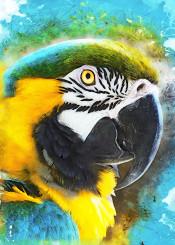 parrot parrots bird birds animal animals decor decoration ara illustration jbjart