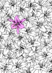 lilium flowers flower bloom blossom vector ink pattern minimal pink