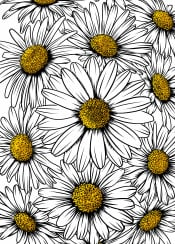 daisy flower bloom blossom pattern nature minimal floral