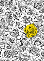 rose roses flowers bloom blossom pattern yellow ink minimal floral