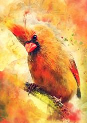 bird birds cardinal cardinals animal animals red yellow orange watercolor digital decor decoration illustration