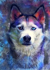 dog dogs husky animal animals pet pets watercolor digital decor decoration illustration