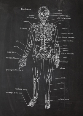 Medical patents by popculart displate skeleton bones bone medicine medic doctor studies blackboard blueprint blackprint academy malvernweather Gallery