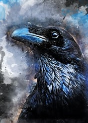 crow crows bird birds animal animals black decor decoration illustration