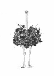 ostrich bird animal floral flower nature drawing ink summer spring humor funny surreal blackandwhite pencil