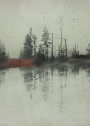 reflection minimalism moody drea landscape trees birds mist texture fall