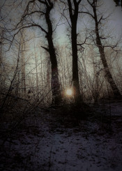 wood forest sunset runrise winter trees