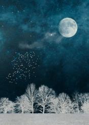 blue night white texture negative moon birds landscape mood surreal