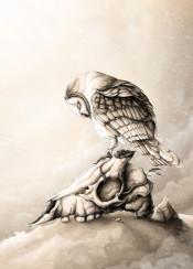 owl skull illustration nature animals animal