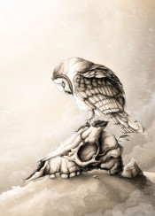 owl skull illustration nature animals animal