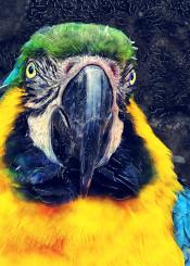 parrot parrots ara animal animals bird birds wild decor decoration illustration