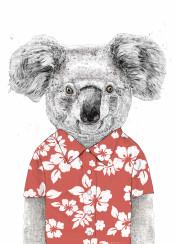 koala animal floral pattern drawing humor funny summer spring bear
