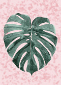 minimal plant6