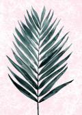 minimal plant2
