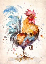 bird rooster chicken feathers animal sillierthansally painting watercolour watercolor farm kitchen outdoors country proud sunrise