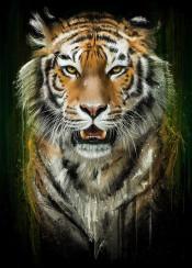 tiger wild animals cool