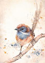bird birds little fluffy wren mallee blue cute tiny sweet pretty branch adventure feather sillierthansally painting watercolour watercolor