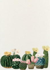 cactus cacti flowers floral green pink yellow pastels nature garden desert tropical pretty minimal vintage