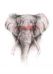 elephant animal wild red retro pencil watercolor abstract vintage handdrawing