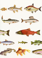 fish fishing sea ocean underwater nautical fins creatures aquatic orange green grey swim vintage collage
