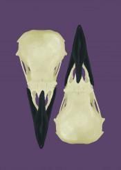 raven skulls skeleton bones birds mythology odin