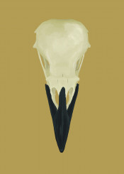 skull bird skeleton raven norse mythology vikings death bones