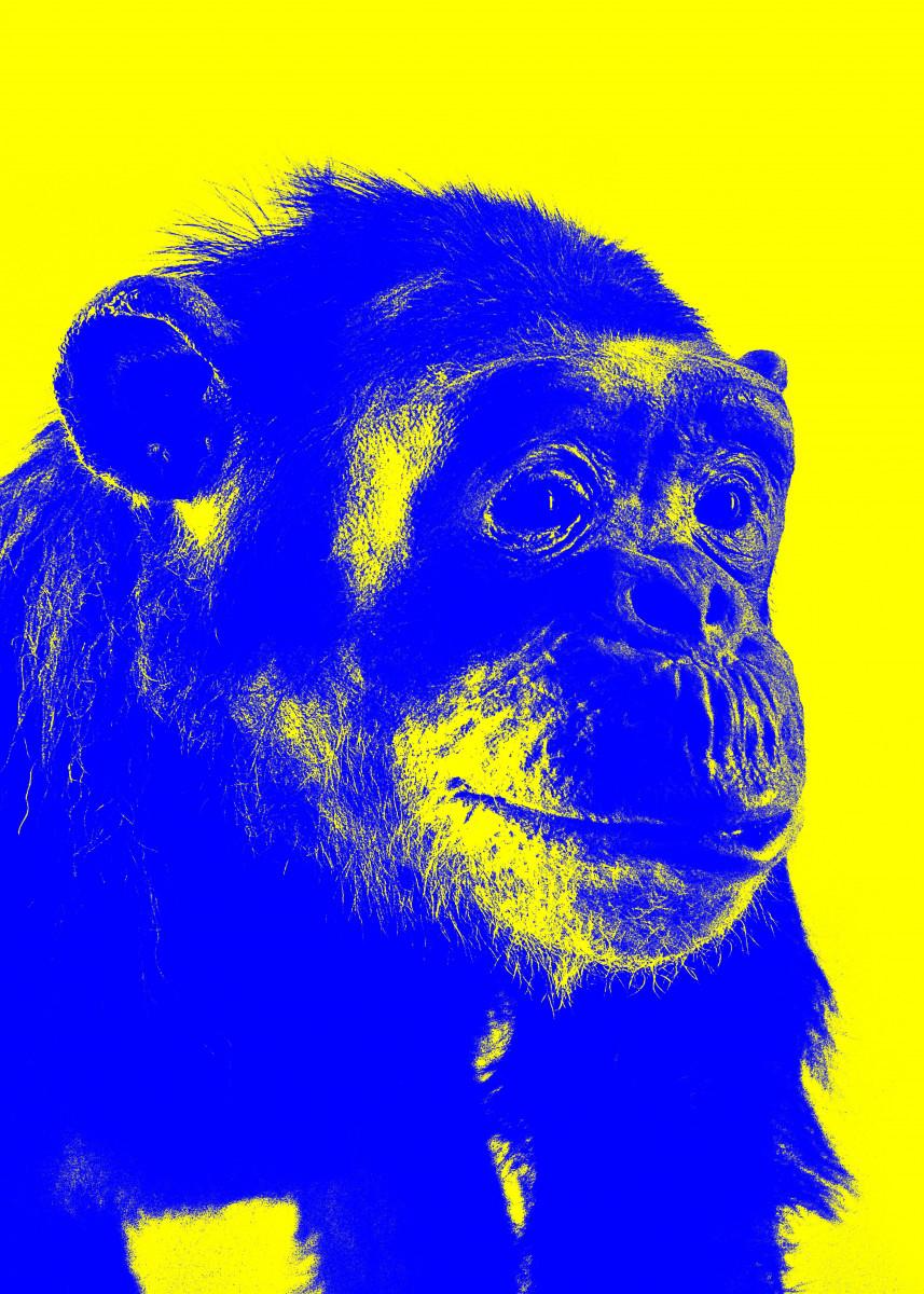 Chimp No 2