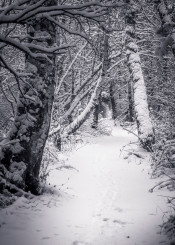 black white fine photography nature woods forest snow cold ice shadow trees shadows greyscale highlights bright contrast martin veskilt