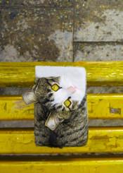 cat cubic animal