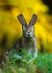 rabbit cubic animal