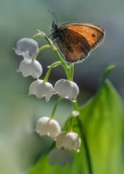 butterfly flowers flower nature closeup macro leaf steam floral pretty delicate wing rest sitting photography blaminsky