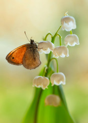 flower butterfly small bells nature macro wings closeup green spring bloom smell fresh garden wildlife nice photography dreamy sunlight day bokeh