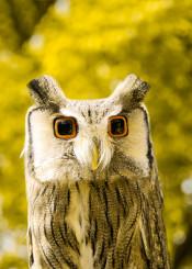 owl cubic animal