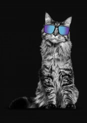 cat catlover cute love glasses modern retro cuttie blackwhite simple pose posing animal cats