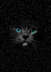 cats star blue eyes cosmos space blackcat cute animals