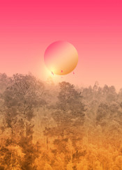 lnadscape forest photography graphics sunset sunrise pink