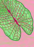 exotic leaf