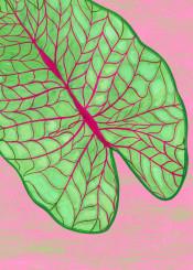 leaf leaves floral ilustration