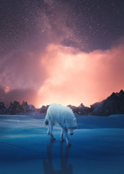 art  blue  cloud  digital  manipulation  night  photo  photography  snow  stars  wolf