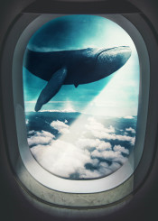 blue whale airplane window swimming flying unexpected