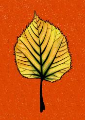 leaf nature plant botanical linden orange yellow autumn autumnal seasonal fall decorative whimsical beautiful pretty illustration painting digital fun flora drawn