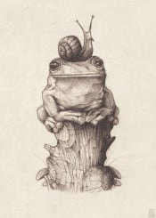 vintage  animals  animal  drawing  drawings  pencil  frog  snail  frogs  snails  old