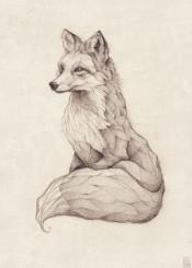 vintage  fox  old  pencil  drawing  drawings  animal  wild  redfox  vulpes