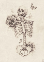 skull  skeleton  skulls  skeletons  vintage  old  roses  rose  butterfly  butterflies